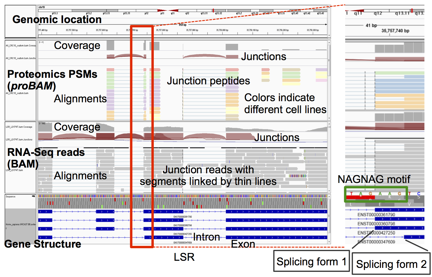proBAM enables co-visualizing proteomic data with RNA-Seq data in genome browsers